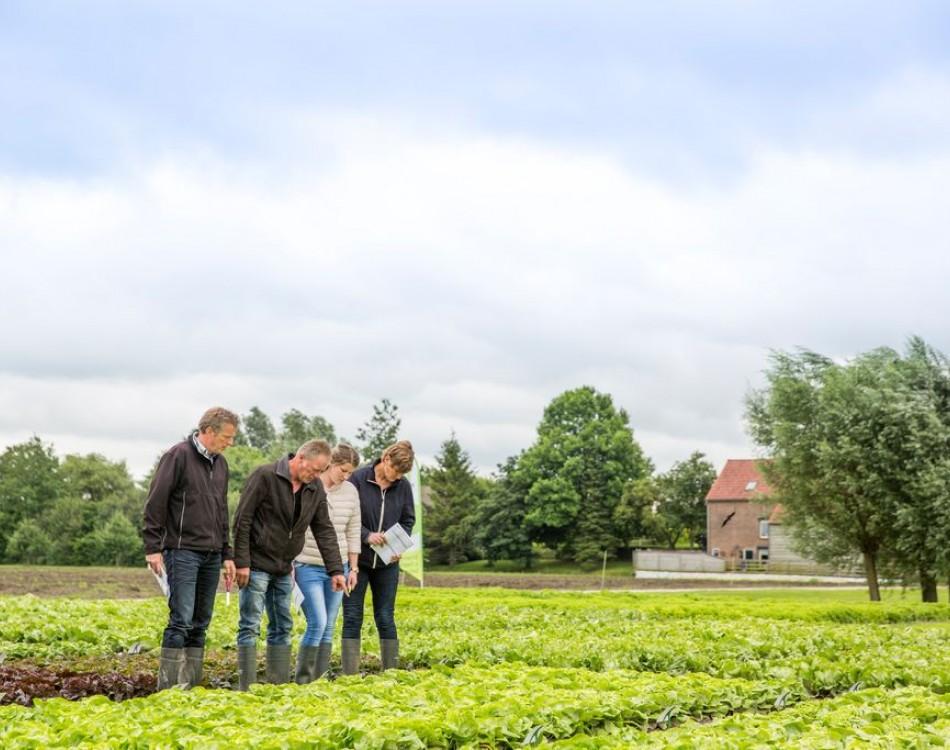 Visitors on demo Field Fijnaart in September 2016
