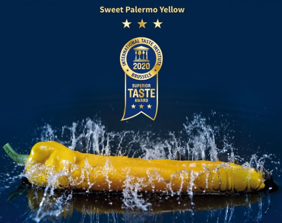 Yellow Sweet Palermo Rijk Zwaan